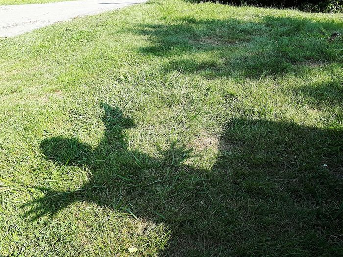 Shadow of grass on field