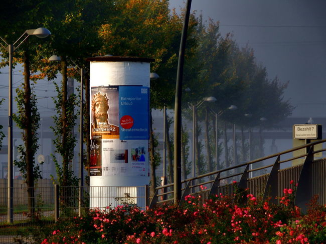 New day is born Autumn Advertising Column Built Structure Day Fog No People Outdoors Plant Tree