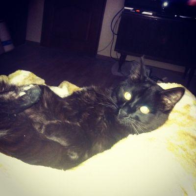 My lovely cat)