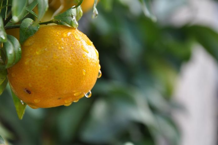 Close-up Day Focus On Foreground Freshness Nature Orange Color Plant Selective Focus Yellow