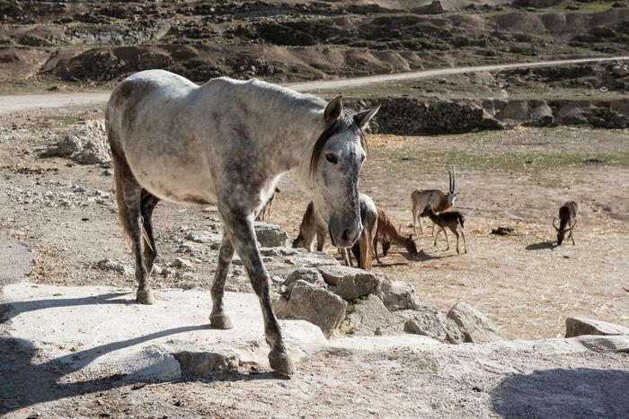 Horse at Safari park in Spain Aitana Animal Animal Themes Animals In The Wild Day Domestic Animals Domesticated Europe Full Length Horse Mammal Mane Nature No People Outdoors Safari Safari Animals Sunny Day Zoo