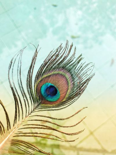 IPhoneX Shotoniphonex ShotOnIphone Close-up Animal Themes No People Feather  Animal Nature Peacock Feather Portrait Day Eye Looking At Camera One Animal Peacock Green Color Cloud - Sky Beauty In Nature Outdoors Digital Composite Natural Pattern Animals In The Wild My Best Photo The Mobile Photographer - 2019 EyeEm Awards