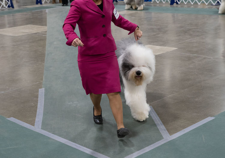 Low section of woman with dog walking on floor