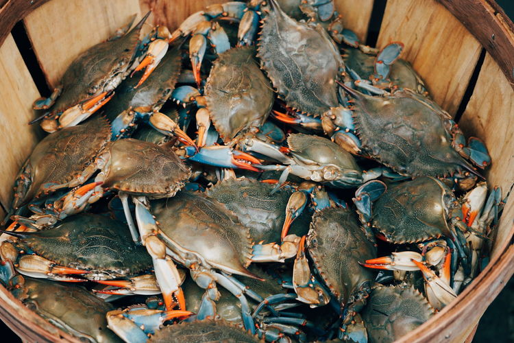 High Angle View Of Crabs For Sale