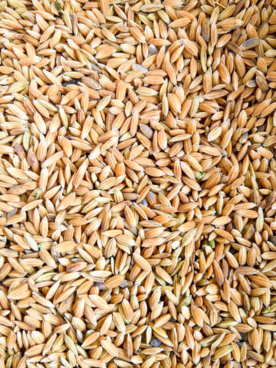 Agriculture Backgrounds Cereal Plant Close-up Day Food Food And Drink Full Frame Grain Healthy Eating Large Group Of Objects Nature No People Oat Flake Rice Seed Wheat Wholegrain