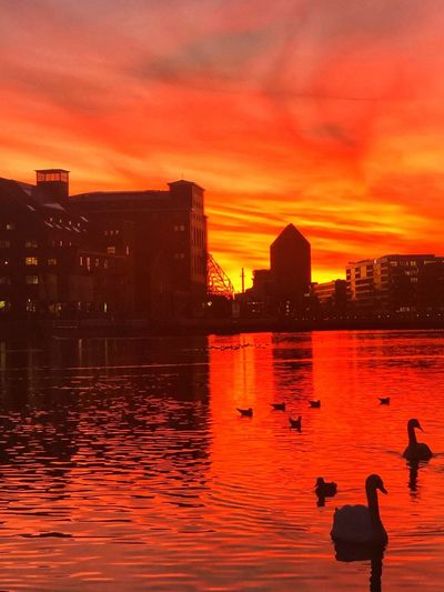 Autumnmood Red Sunset Sky Orange Color Water Architecture Building Exterior Autumn Mood Built Structure Cloud - Sky City Nature Reflection Silhouette Building Lifestyles Cityscape Outdoors People Dusk Beauty In Nature Romantic Sky EyeEmNewHere Autumn Mood Capture Tomorrow My Best Photo