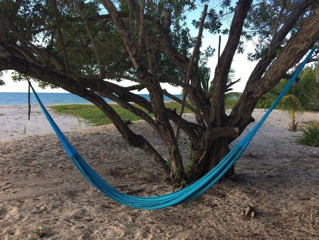 Tree Nature Day Sand Outdoors Tree Trunk No People Growth Beach Beauty In Nature Scenics Sky Hammock Hammock At The Beach Celestun Celestún, Yucatán