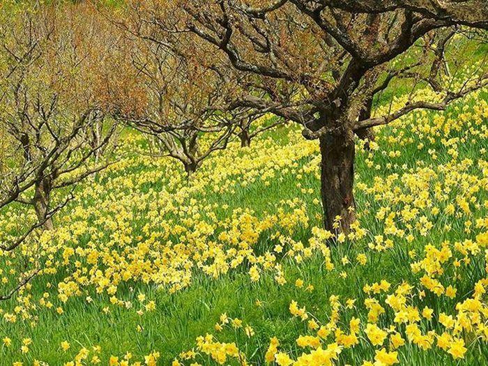* 水仙の花畑😃03/05 Narcissus flower garden 😃03/ 05 * 風景 名古屋 眺め Landscape Vista 眺望 View Nagoya スナップ Japan 日本 Love_world Bestnatureshot 綺麗 景色 Nature 自然 爽やか Sky Igworldclub Follow Worldbestgram Aichi Beautiful Lov view_japan_nagoya_yama 🎶