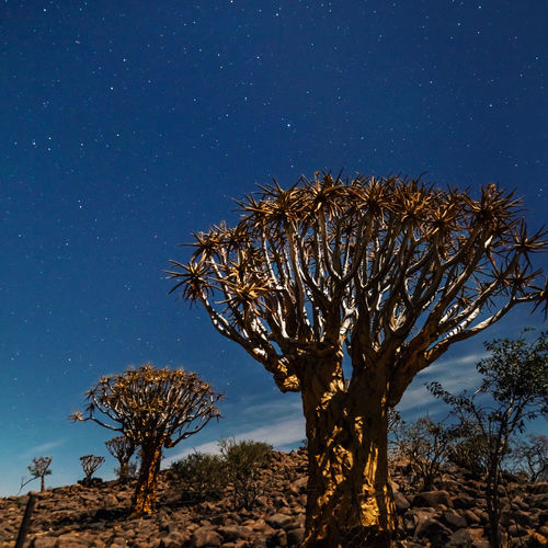Low angle view of tree against clear sky at night