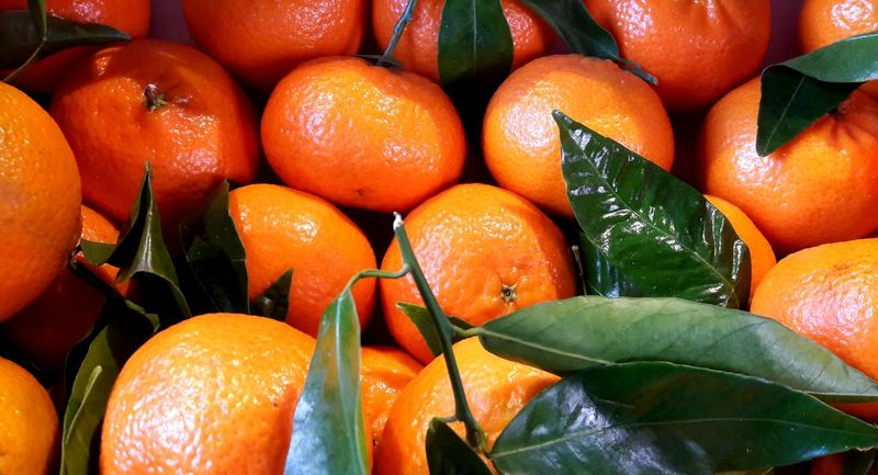 The scent of freshly peeled mandarins... is always connected with Christmas for me..🙄🎄 Mandarins Christmas Time Art Is Everywhere Memories Childhood Food Close-up No People Citrus Fruit