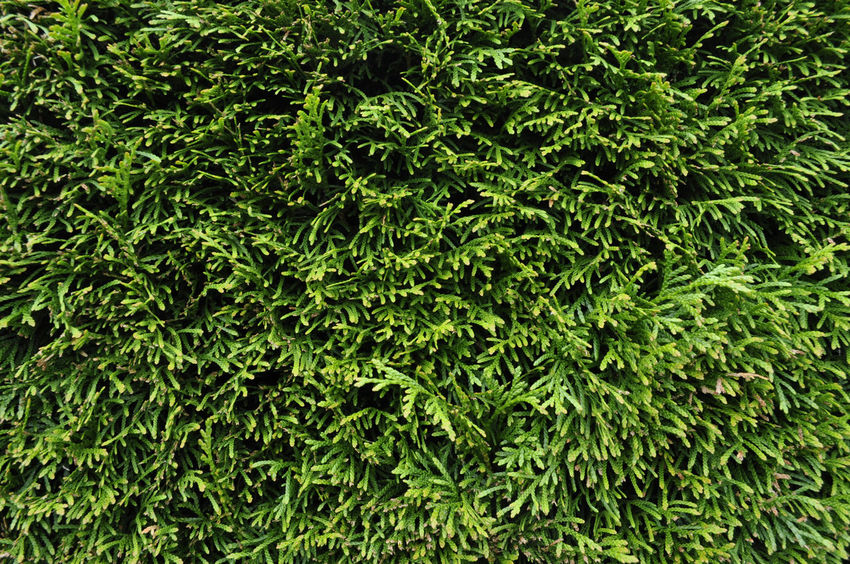 Blattgrün Green Color Patterns In Nature Sträucher Textures and Surfaces Day Full Frame Green Grün Harmony Healthy Nature Pattern Shrub Texture