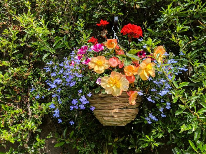Hanging Basket Flowers Hanging Basket Flower Flower Head Multi Colored Leaf Close-up Plant In Bloom Blooming Plant Life Petal Blossom