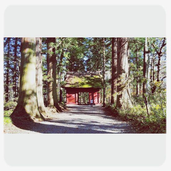 戸隠 Togakushi Shrine Oldtree Nature