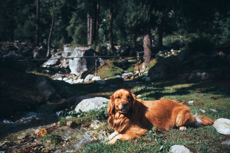 Dog relaxing in forest