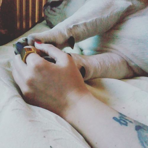 Meandyou Bulldoginglese Bullove Love ♥ Hands
