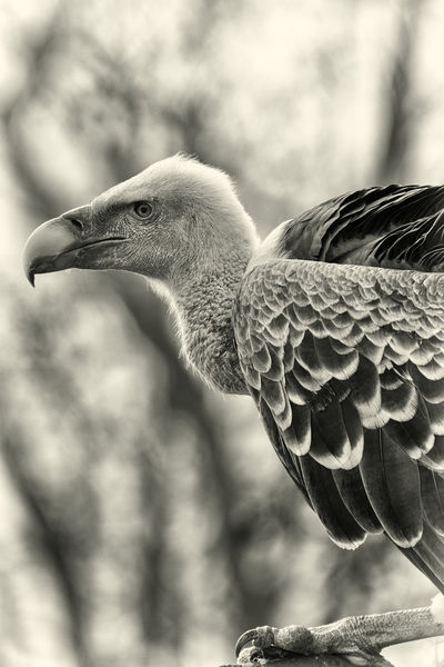 Profile Animal Themes Animal Wildlife Animals In The Wild Beak Bird Close-up Focus On Foreground Nature One Animal Outdoors Vulture