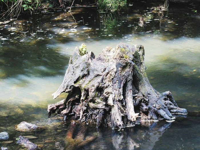 Treestump in the water. Water Nature No People Outdoors Underwater Beauty In Nature Close-up Eyem Best Shots Nature_collection Eyeemphotography EyeEm Nature Lover Photography Beauty In Nature Treestump Artinnature Artofnature Treestump Riverside Photography Tree Trunk Tree Art