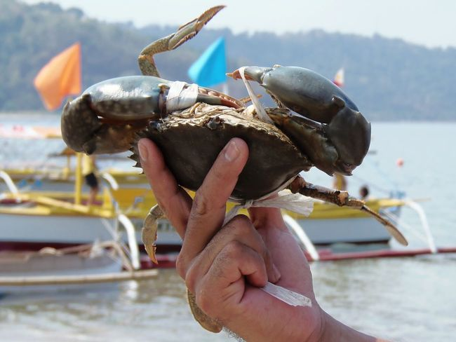 Cholesterol rich!!! 😂😂😂 Cholesterol Crab Crabs Crabs!! Crabshell Crabsoup Crabs For Sale Crabsview Crabsticks Crabs, Crabs Claw Crabs In A Cup Crabs In Ice Eyeem Philippines EyeEm Best Shots Seafoods Seafoodporn SEAFOOD🐡 Seafood Yum:) SeafoodLover Wheninsubic Subic Subic Bay Eyeem Philippines Album The Great Outdoors - 2016 EyeEm Awards