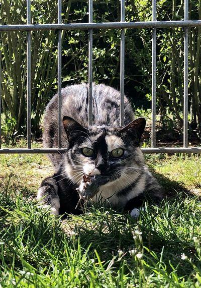 Cat sitting in a grass