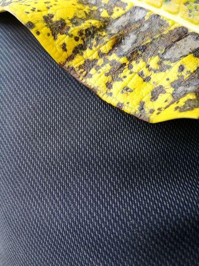 Full frame shot of pattern on bed