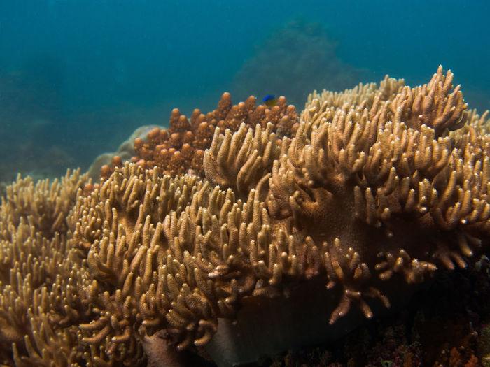 Beautiful coral and fish located in coral reef area at tioman island, malaysia