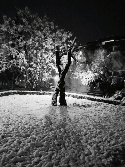 Snow 00.1 Hello World