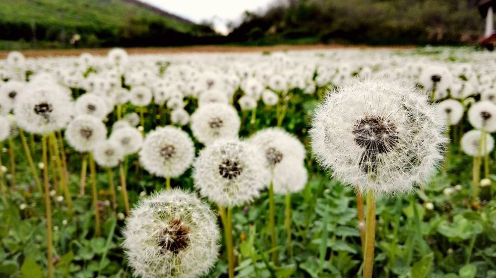 Nature Growth Grass Focus On Foreground Outdoors Field Plant No People Beauty In Nature Flower Day Fragility Close-up Beautyfully Organized