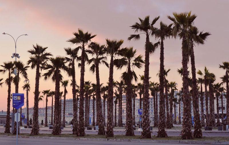 Sochi Sochi Soshi2014 Tree City Palm Tree Politics And Government Sky Shore