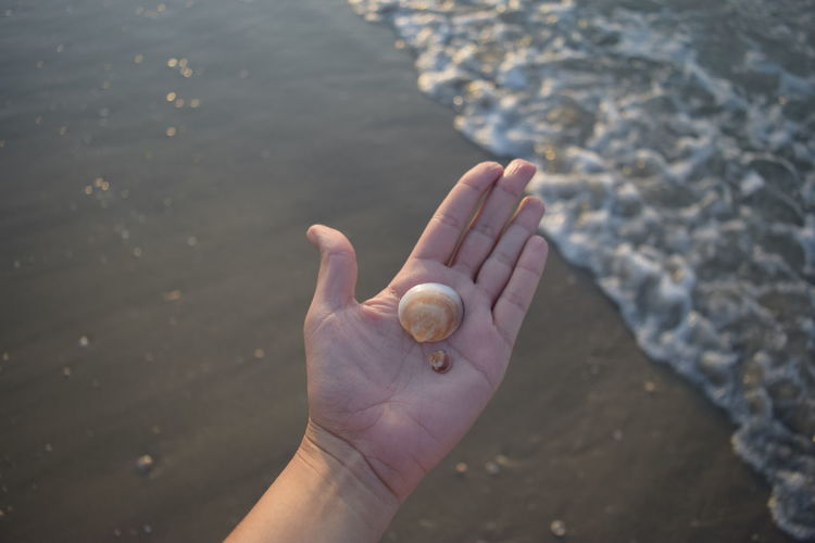 Cropped hand showing seashells at beach