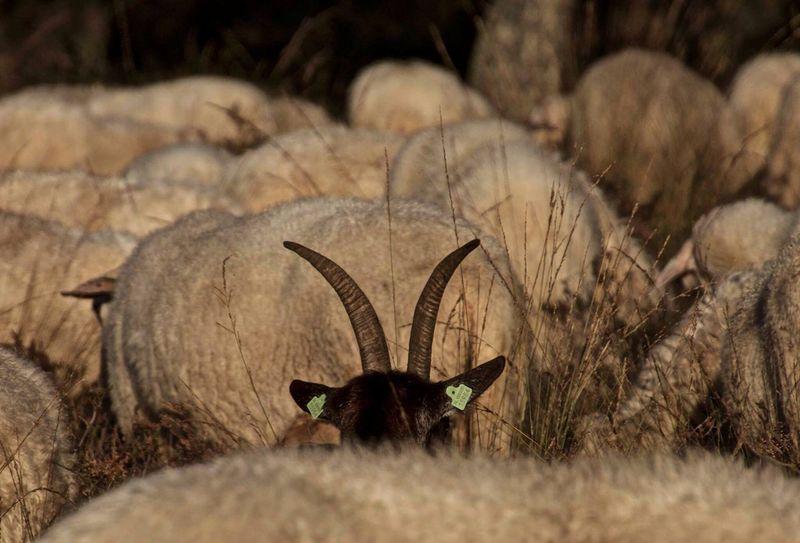 Peek a boo Animal Themes Nature Day Myownphotography Headshot Outdoors Animal Body Part