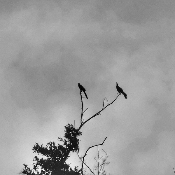 Bird Animal Wildlife Black Color Nature Reserve Sky Nature Silhouette No People Taking Photos Like4like Xperiaphotography Monochrome B&w Bestphotooftheworld Best Of EyeEm The Moment Fujifilm_xseries FujiFilm X20 Fujifilmlifestyle Fujifilm
