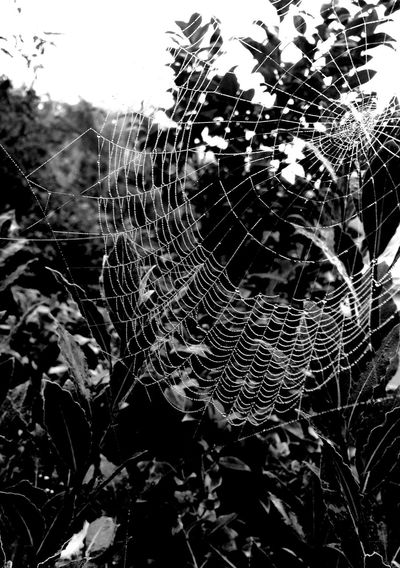 First Eyeem Photo Spidersweb Spiders Web Morning Dew On Spider Web