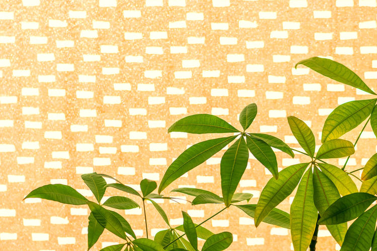 High angle view of potted plant leaves
