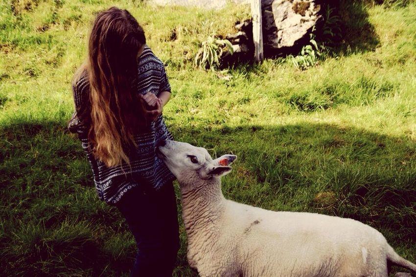 Me and my friend Enjoying Life Taking Photos Sheep Norway EyeEm Best Shots