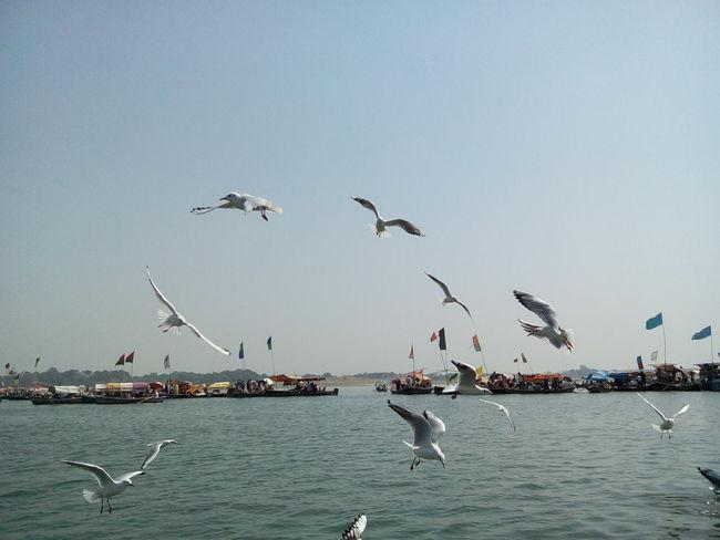 Nature is full of joy Flock Of Birds Water Bird Flying Seagull
