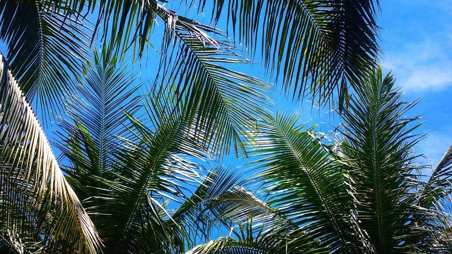 Colour Of Life Blue Sky Green
