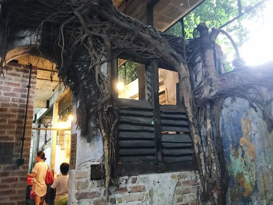 surrounded by roots Built Structure Architecture Real People Building Men Building Exterior Day Window Tree Nature Outdoors Sunlight Lifestyles