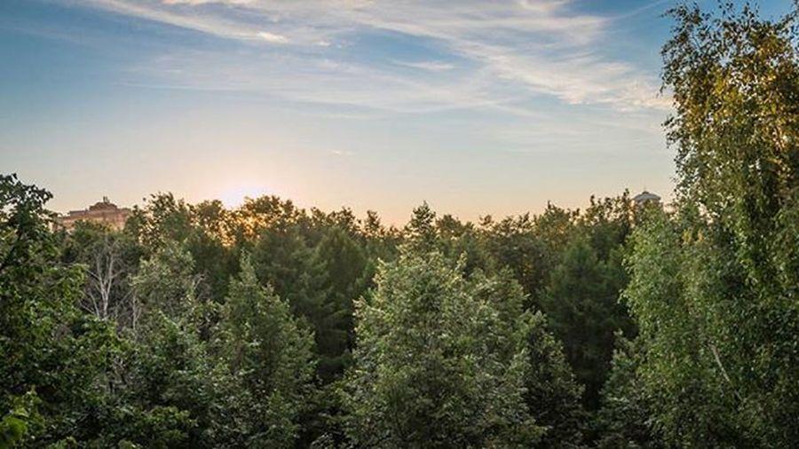 Пермь Perm Openperm деревья Nature Landskape Blue Sky Clouds колесообозрения Россия Russia Inperm Закат Sunset Sun небо Permregion Permloves Permlife