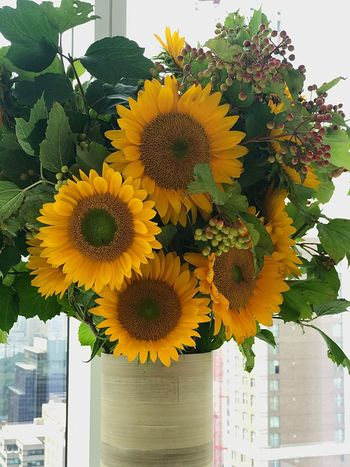 Flower Yellow Freshness Petal Fragility Close-up Flower Head Day No People Sunflower Beauty In Nature Indoors  Nature Blooming Leaf Growth Architecture Bloomberg Building Vase Plant