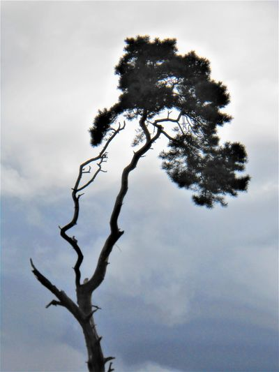 Low angle view of tree branch against sky