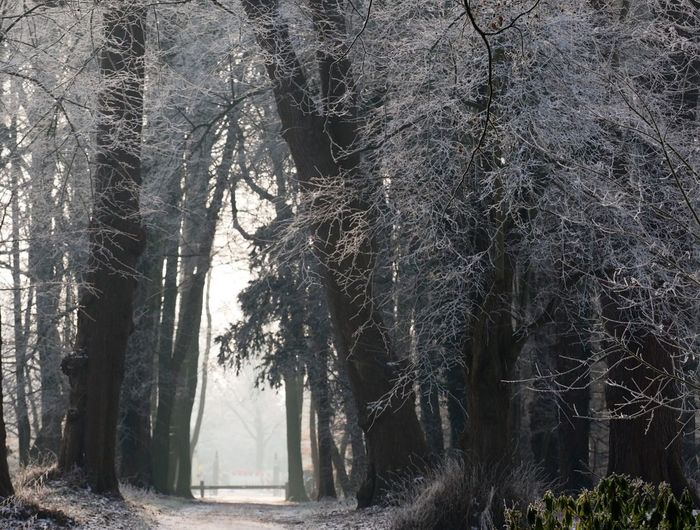 Winter im Schlosspark Rastede