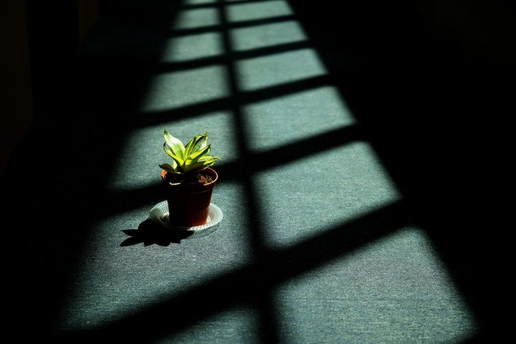High angle view of potted plant on window