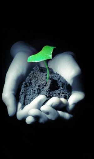 Future In Our Hands Fate's Forest Technology Is The End Leaf New Life Savetheplanet Black And White Color Select Creative Light And Shadow