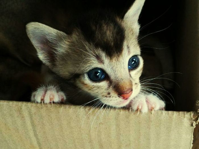 Pets Kitten Animal Animal Head  Cute First Eyeem Photo