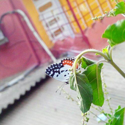 A Butterfly First Eyeem Photo
