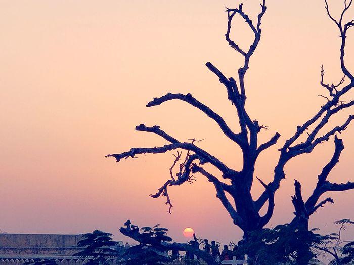 sunset in Jaipur #jaipurforts #balanceandcomposure #traveldiaries Tree Bare Tree Animal Wildlife Branch Animals In The Wild Beauty In Nature Rural Scene
