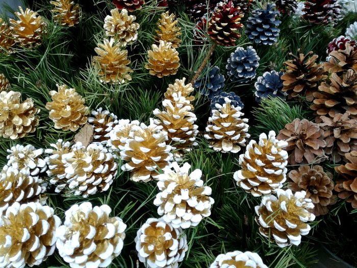 No People Nature Day High Angle View Beauty In Nature Outdoors Close-up Pine Cones Pinecones Chtistmas Season Christmas Decoration X-mas Is In The Air🎄🎅 Spirit Of Christmas Full Frame Advent Season December Views