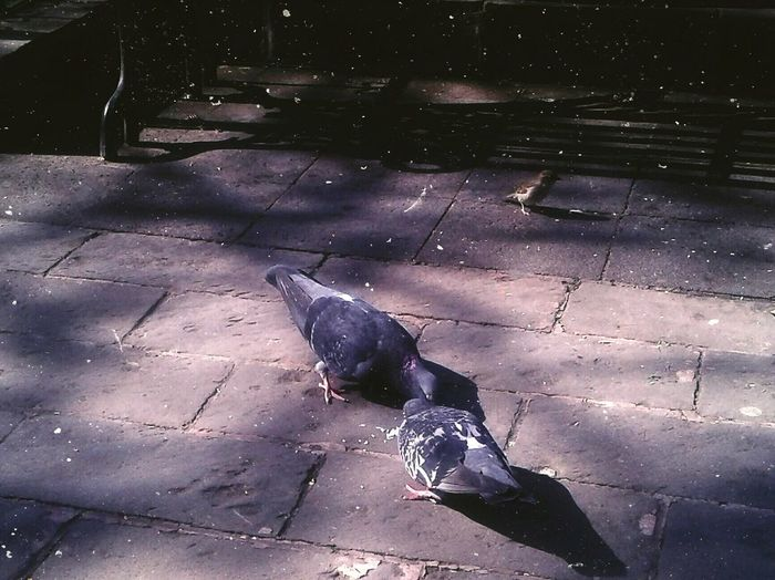 Una tarde cualquiera. Streetphotography Street Photography Street Close-up Pigeon Spread Wings Large Group Of Animals Bird