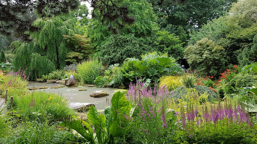 looking round the gardens, with the pond Flower Water Tree Backgrounds Full Frame Grass Close-up Plant Green Color Greenery Flora Blossoming  Green Plant Life Lush In Bloom Vegetation Botanical
