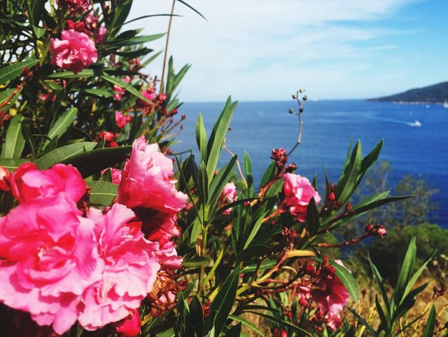 Growth Flower Nature Beauty In Nature Plant No People Water Blooming Sea Petal Outdoors Day Fragility Freshness Sky Flower Head Close-up Porto Azzurro Isola D'Elba  Italy